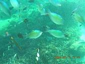 長灘島環島:DSCN4787.JPG