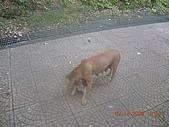 基隆情人湖公園:DSCN7896.JPG