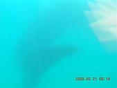 Dosonl 與鯨鯊共游:DSCN4888.JPG