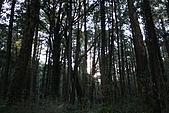 阿里山:IMG_0147.JPG