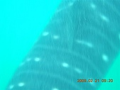 Dosonl 與鯨鯊共游:DSCN4892.JPG
