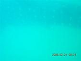 Dosonl 與鯨鯊共游:DSCN4896.JPG