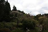 阿里山:IMG_0178.JPG