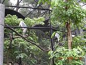 台北市立木柵動物園:DSCN7610.JPG