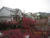 清境小瑞士花園:IMG_2354.JPG