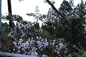 阿里山:IMG_0095.JPG