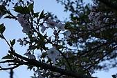 阿里山:IMG_0105.JPG