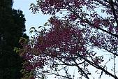 阿里山:IMG_0115.JPG