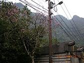雲仙樂園:DSCN6072.JPG