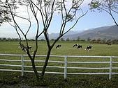 新光兆豐休閒農場:DSCN2759.jpg