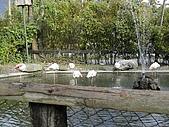 新光兆豐休閒農場:DSCN2752.jpg