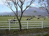 新光兆豐休閒農場:DSCN2760.jpg