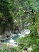 太魯閣國家公園:R0030183.jpg