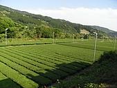 大井川SL列車:R0013910.jpg