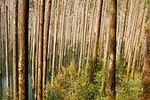 水漾森林、鹿屈山、鹿屈山前峰:DSC_0270.JPG
