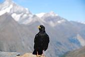 瑞士旅遊-策馬特之高納冰河、利菲爾湖:DSC_0338.JPG