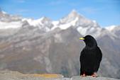 瑞士旅遊-策馬特之高納冰河、利菲爾湖:DSC_0350.JPG