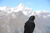 瑞士旅遊-策馬特之高納冰河、利菲爾湖:DSC_0360.JPG