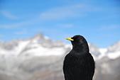 瑞士旅遊-策馬特之高納冰河、利菲爾湖:DSC_0368.JPG