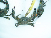 北海岸抓螃蟹:PA140088.JPG