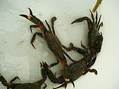 北海岸抓螃蟹:PA140089.JPG