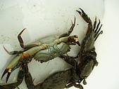北海岸抓螃蟹:PA140090.JPG