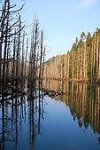 水漾森林、鹿屈山、鹿屈山前峰:DSC_0352.JPG