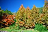 秋遊武陵農場:DSC_0913.JPG