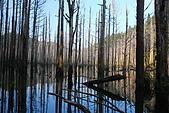 水漾森林、鹿屈山、鹿屈山前峰:DSC_0360.JPG