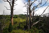 散落山中的珍珠-加羅湖群:DSC_0126.JPG