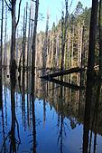 水漾森林、鹿屈山、鹿屈山前峰:DSC_0370.JPG