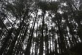 平岩山踏勘:DSC00274.JPG