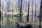 水漾森林、鹿屈山、鹿屈山前峰:DSC_0382.JPG