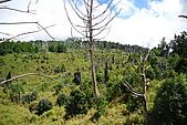 散落山中的珍珠-加羅湖群:DSC_0150.JPG