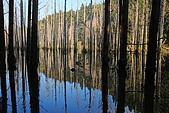 水漾森林、鹿屈山、鹿屈山前峰:DSC_0438.JPG