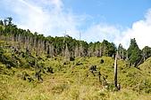 散落山中的珍珠-加羅湖群:DSC_0182.JPG