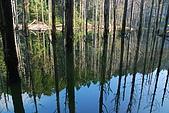 水漾森林、鹿屈山、鹿屈山前峰:DSC_0440.JPG