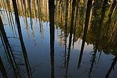 水漾森林、鹿屈山、鹿屈山前峰:DSC_0442.JPG