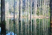 水漾森林、鹿屈山、鹿屈山前峰:DSC_0455.JPG