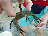 北海岸抓螃蟹:PA140122.JPG