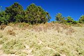 北一段縱走day2-審馬陣山、南湖北山:DSC_0156.JPG