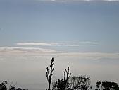 火燒山、面天山、向天山:P1060435.JPG