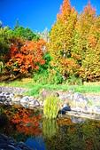秋遊武陵農場:DSC_0912.JPG