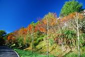 秋遊武陵農場:DSC_0915.JPG