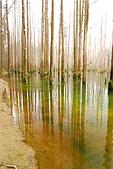 水漾森林、鹿屈山、鹿屈山前峰:DSC_0173.JPG