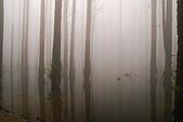 水漾森林、鹿屈山、鹿屈山前峰:DSC_0194.JPG