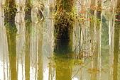 水漾森林、鹿屈山、鹿屈山前峰:DSC_0205.JPG