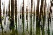 水漾森林、鹿屈山、鹿屈山前峰:DSC_0224.JPG