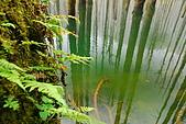 水漾森林、鹿屈山、鹿屈山前峰:DSC_0231.JPG