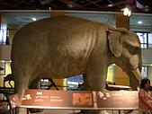 國立史前文化博物館 :DSCF0559.JPG